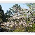 2009.3.21阿里山賞櫻 (56)