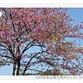 2009.3.21阿里山賞櫻 (66)