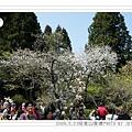 2009.3.21阿里山賞櫻 248 (2)