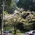 2009.3.21阿里山賞櫻 248 (84)