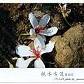 徐妹1Y10M挑水賞桐(6)