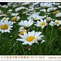 .5. 9菁芳園 (7)