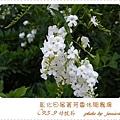 .5. 9菁芳園 (16)