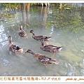 5. 9菁芳園 (6)