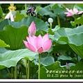植物園 (65)