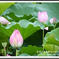 植物園 (66)
