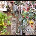 南庄老街 (40)