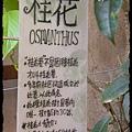 南庄老街 (41)