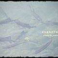蓬萊溪護魚步道 (28)