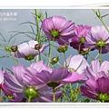 2009南投花卉嘉年華 (99)