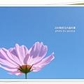 2009南投花卉嘉年華 (93)