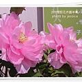 2009南投花卉嘉年華 (01)