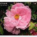 2009南投花卉嘉年華 (59)
