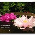 2009南投花卉嘉年華 (54)