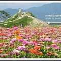 2009南投花卉嘉年華 (154)