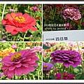 2009南投花卉嘉年華 (02)