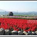 2009南投花卉嘉年華 (109)