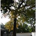 嘉義公園 (16)