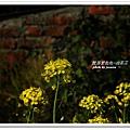油菜花田 (61)