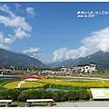 台東池上花海 (75)