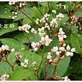 new知本國家森林遊樂區 (68)