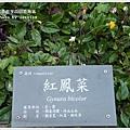 new知本國家森林遊樂區 (81)