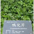 new知本國家森林遊樂區 (82)