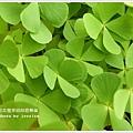 new知本國家森林遊樂區 (98)