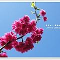 虎年東勢林場 087