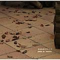 五峰清泉部落 (209)