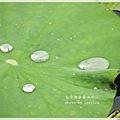 台中港區藝術中心 (34)