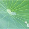中興新村賞荷趣 (15)