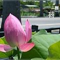 中興新村賞荷趣 (25)