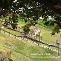大坑地震紀念園區 (81)