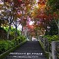 太平山莊紫葉戚 (37)
