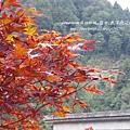 太平山莊紫葉戚 (65)