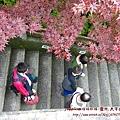太平山莊紫葉戚 (66)