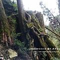 太平山蹦蹦車茂興懷舊步道 (113)