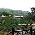 玉蘭社區玉蘭茶園 (13)
