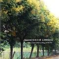 再拍溪湖巒樹 (3)