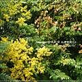 再拍溪湖巒樹 (9)