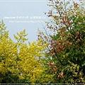 再拍溪湖巒樹 (10)