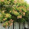 再拍溪湖巒樹 (18)
