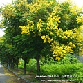 再拍溪湖巒樹 (22)