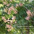 拍溪湖巒樹 (6)