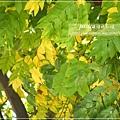 拍溪湖巒樹 (12)