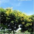 首次溪湖拍巒樹 (6)