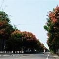 轉紅巒樹(1)