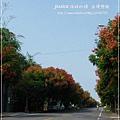 轉紅巒樹 (2)