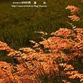 溪州 欒樹 鍋物 (96)